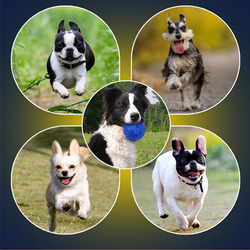 hur man kan minska den destruktiva kraft för hundar