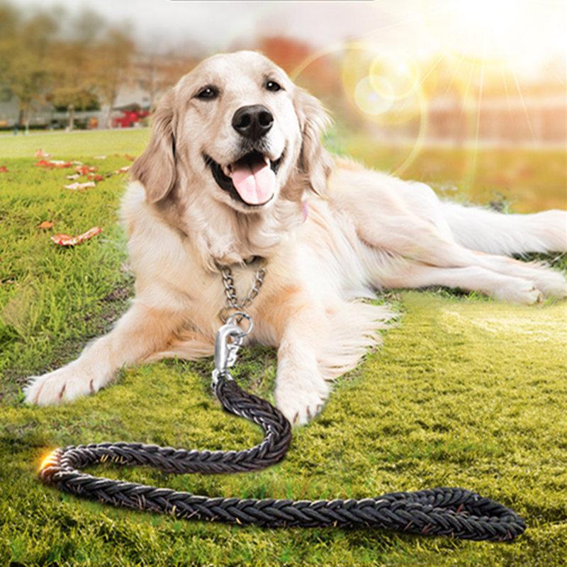 - att träna golden retriever hundar att utbilda gyllene retri