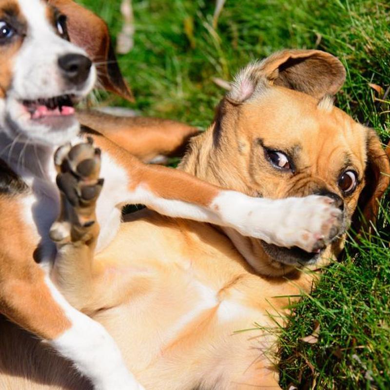 Vilken medicin ska hunden ha lös tarmar ta?