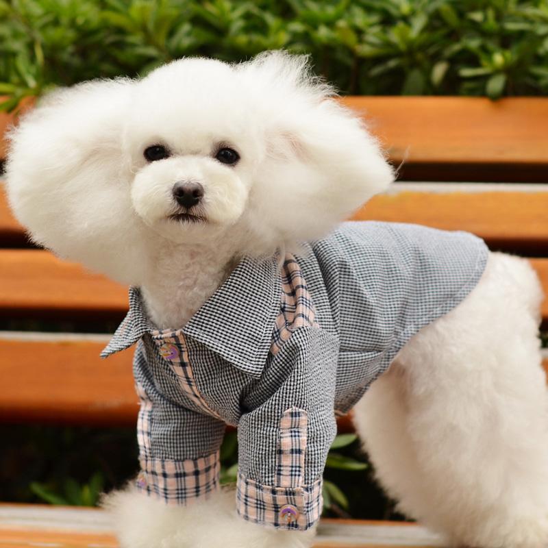När ska jag ge min hund kalcium?