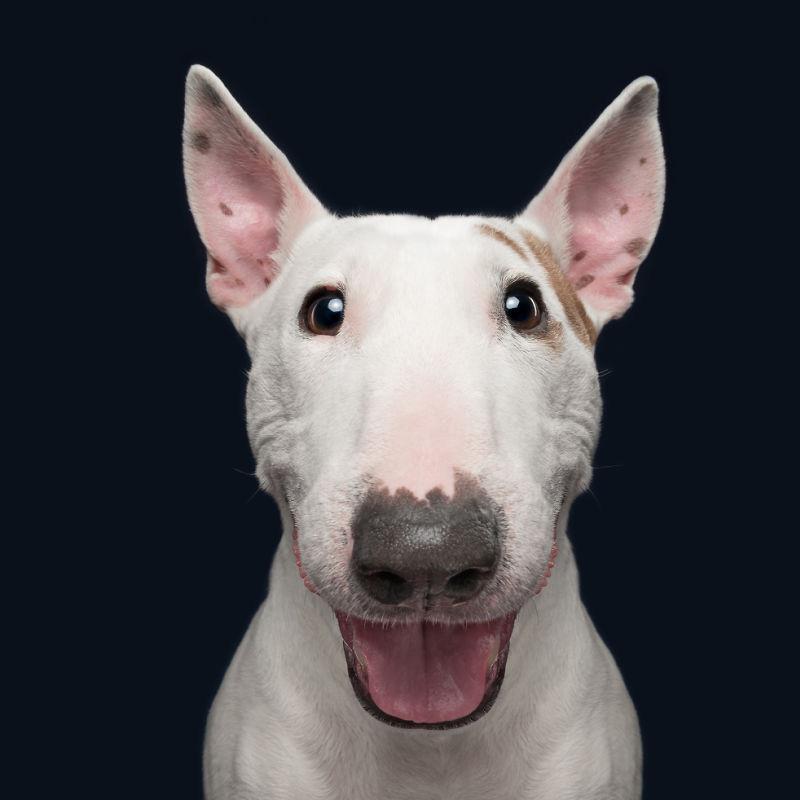 Vad händer om hunden inte lyssnar? Hur får du en hund att följa instruktionerna?
